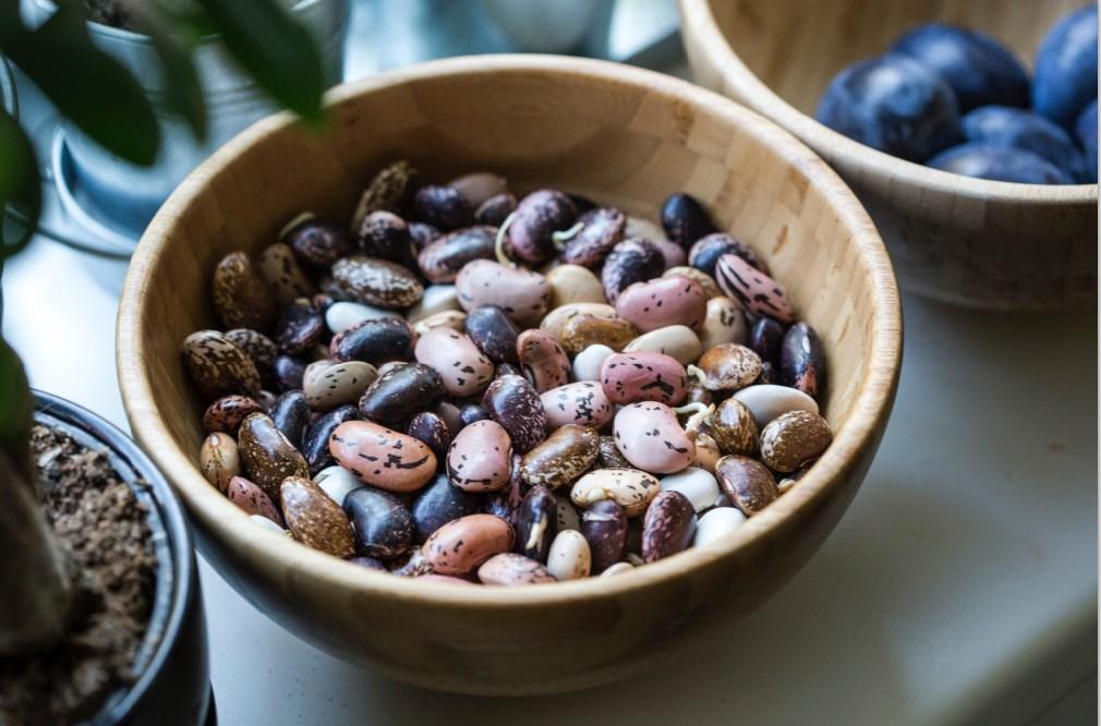 חלבון מהצומח המדריך השלם